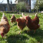 animaux-la ferme d'Anjou